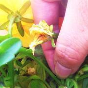 花がら摘みと切り戻し