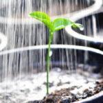 庭土の性質を確認