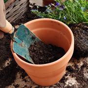 鉢替えと植え替えの必要性
