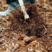 土質に合わせた土づくり