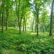 自然の肥料