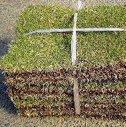 芝生の選び方と購入時の注意事項