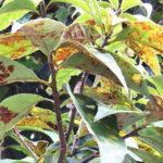 症状から解る!花や庭木などが枯れる理由と原因対策