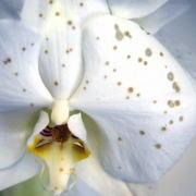 花びらにできたシミ