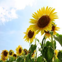 植物に必要な日当たりと環境