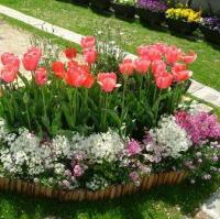 花壇づくりの場所と土