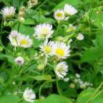 雑草対策と良い土壌の関係